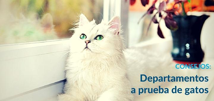 ¿Qué hacer para lograr un departamento a prueba de gatos?