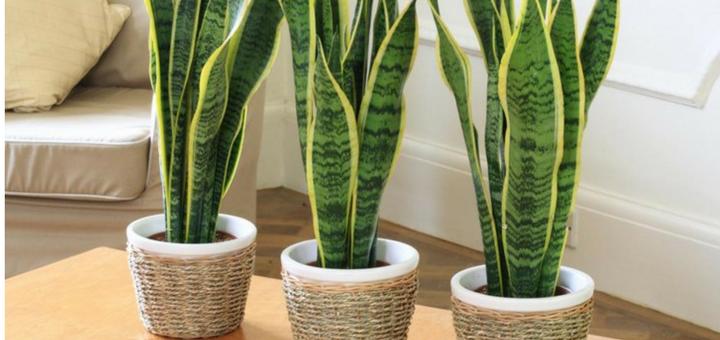 Descubre las mejores plantas para decorar tu departamento nuevo
