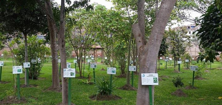 Jardín Botánico Plantas Medicinales