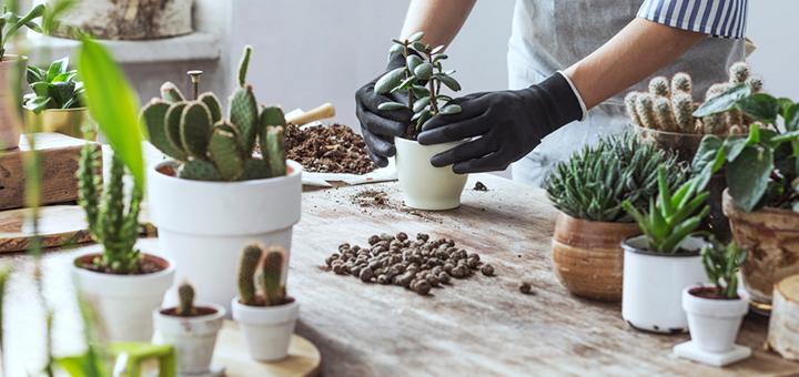 adopta plantas departamento