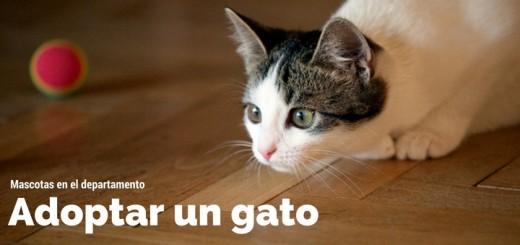 adoptar un gato departamentos en jesus maria