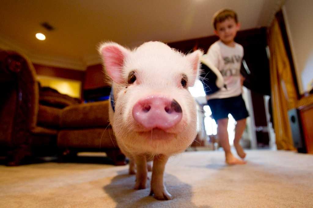 7 Aspectos a considerar antes de tener una mascota en tu departamento