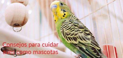 Cuidar aves como mascotas