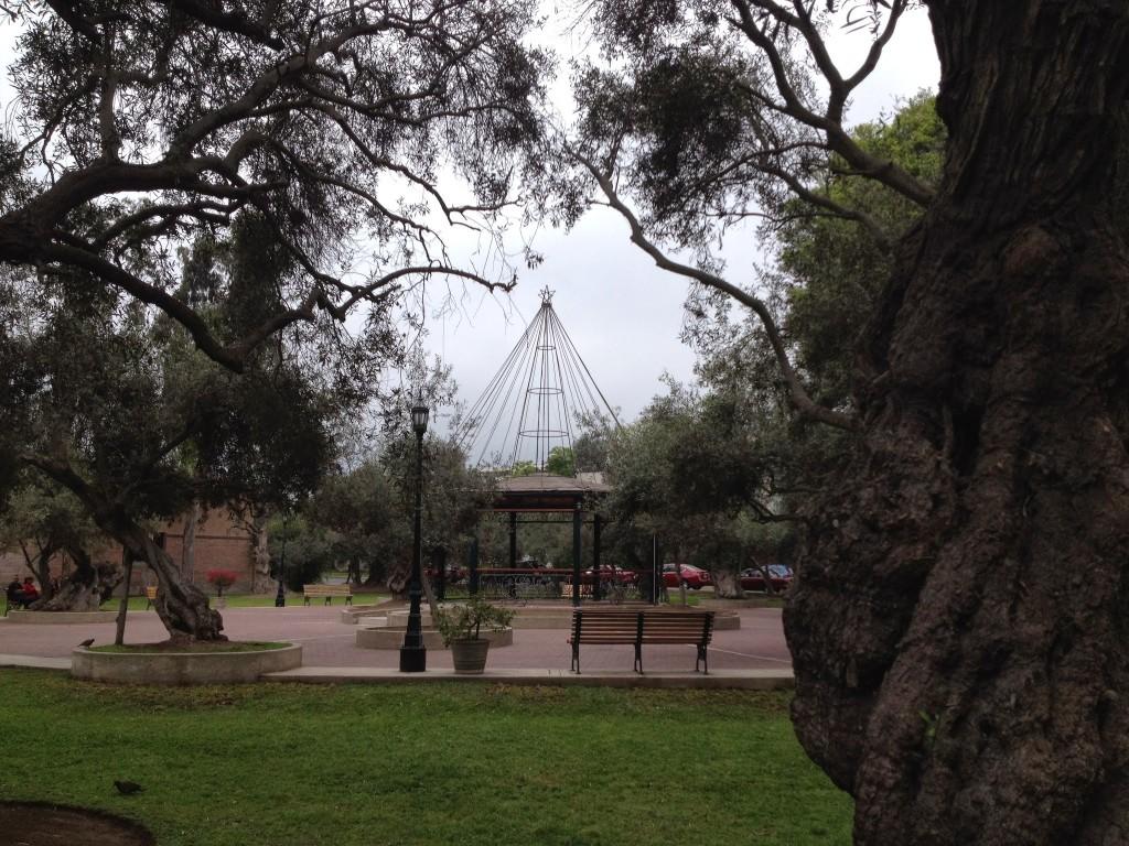 Rotonda del Bosque el Olivar