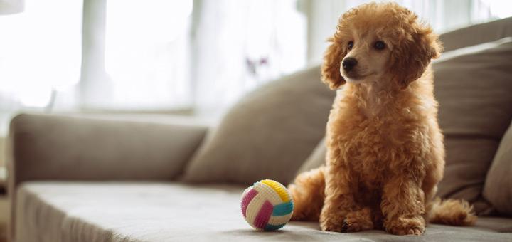 perro departamento