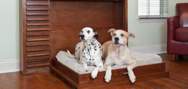 como cuidar perro departamento de un dormitorio