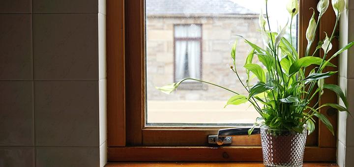 conoce plantas beneficios segun feng shui ciudaris inmobiliaria