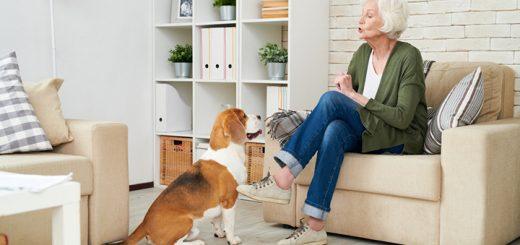 consejos entrar perro apartmento