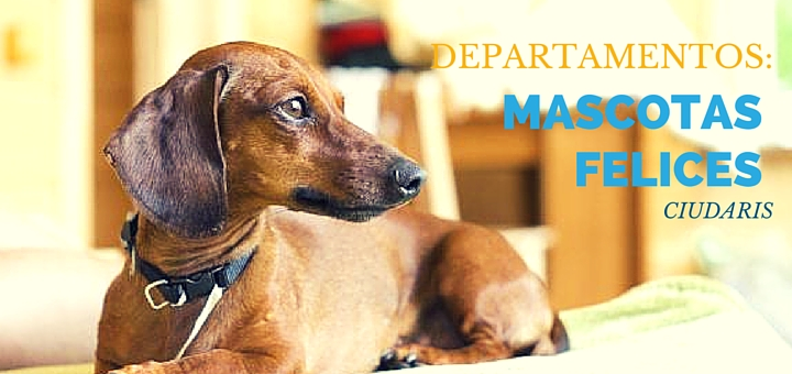 Tu mascota vivirá feliz en tu departamento con estos sencillos consejos