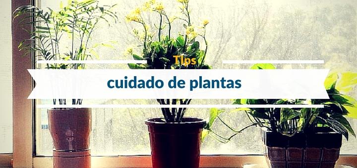 6 Tips para el cuidado de plantas de nuestro departamento
