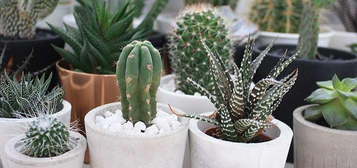 Ciudaris recomienda la decoración creativa con plantas