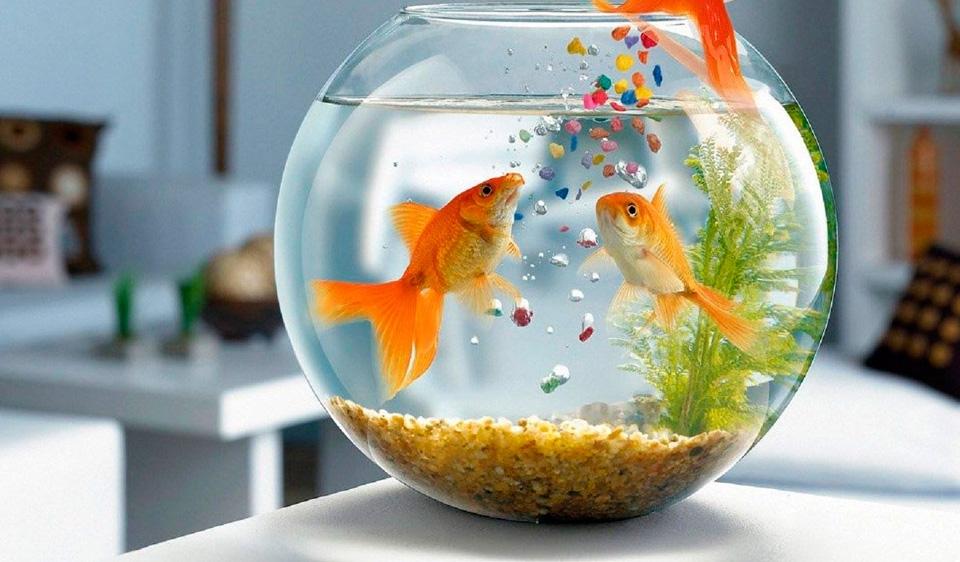 Pensando en tener mascotas en tu departamento nuevo for Peces alimentacion
