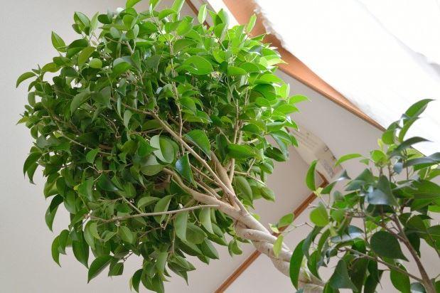 departamento nuevo plantas de invierno