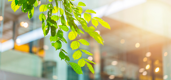 edificios verdes conoce todas ventajas