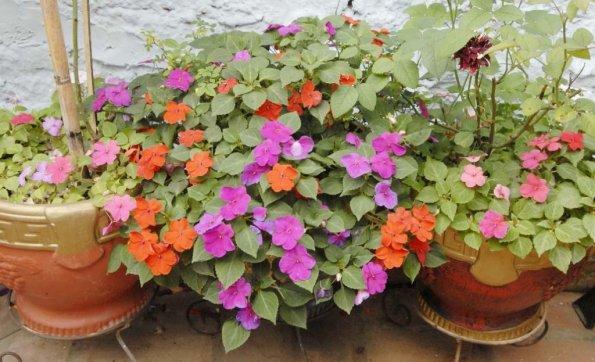 departamento en san miguel ciudaris flores