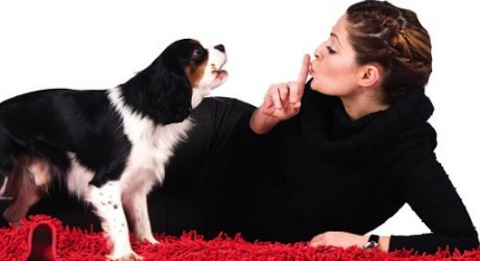 5 Hábitos saludables que mejorarán tu vida y la de tu mascota