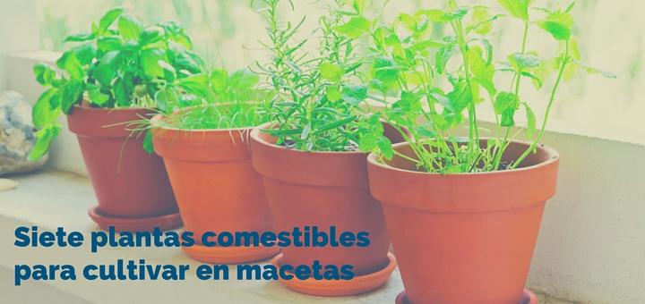 macetas-chiclayo-departamentos-ciudaris