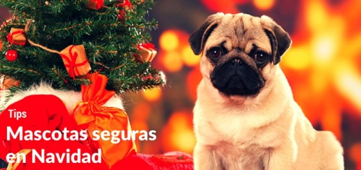 7 Consejos para mantener seguras a las mascotas en Navidad