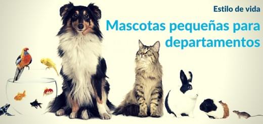 Mascotas pequeñas: ¿cuáles se adecuan a un departamento?