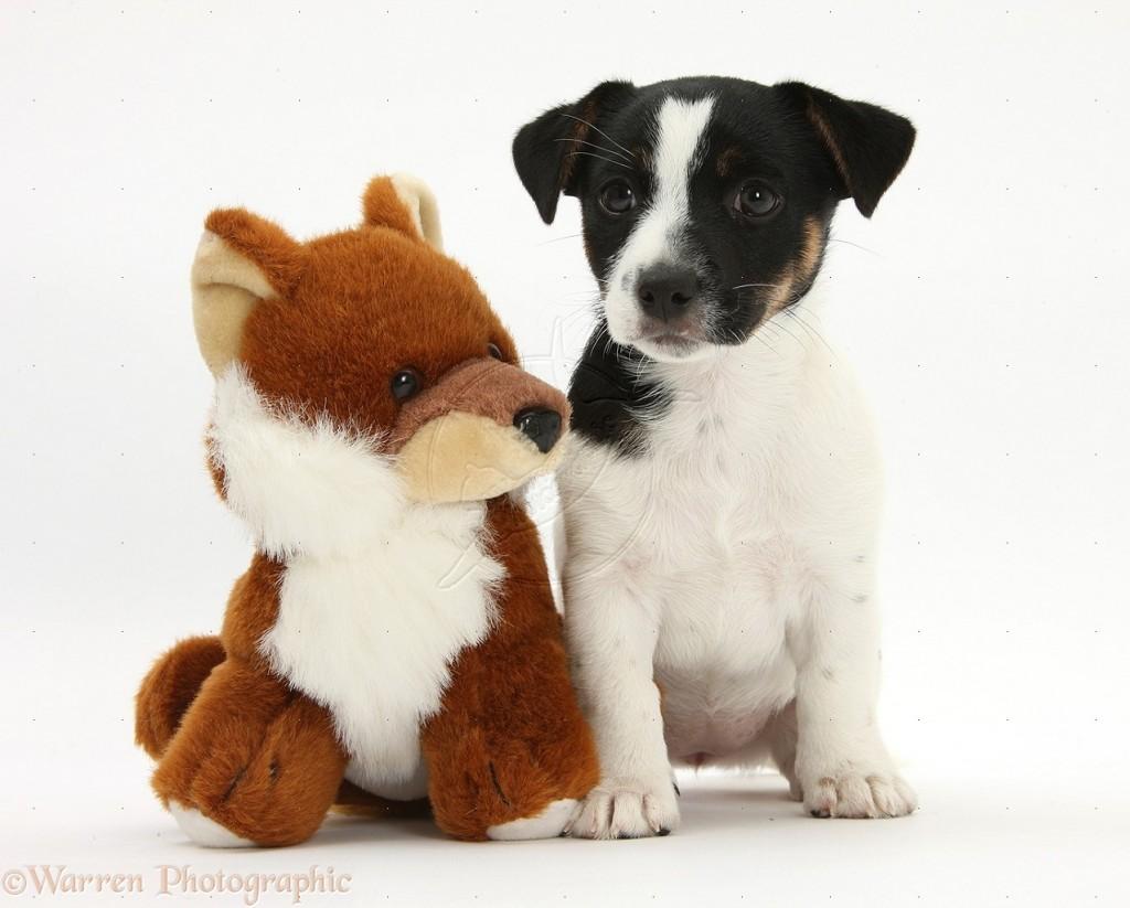 Mascotas pequeñas:¿cuáles se adecuan a un departamento?