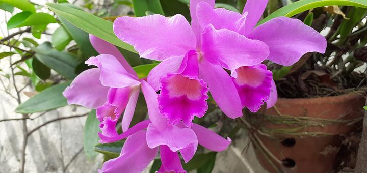 orquideas feng shui plantas beneficiosas
