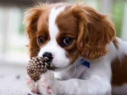Departamentos: 10 Razas de perro ideales para tu hogar