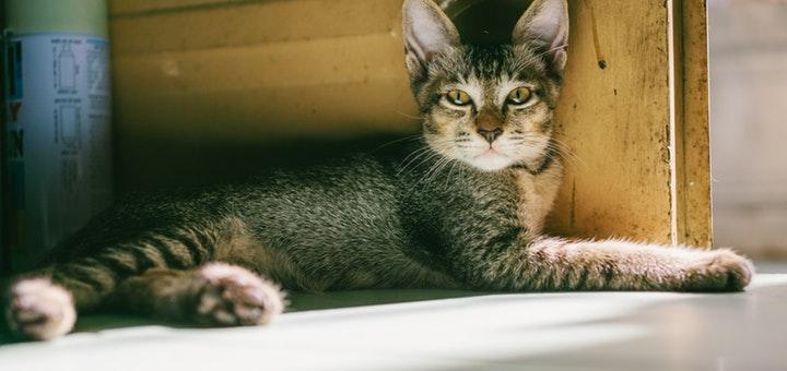 mantener gato feliz departamento nuevo