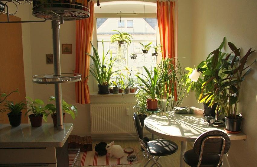 Plan de 5 pasos para refrescar las plantas del hogar