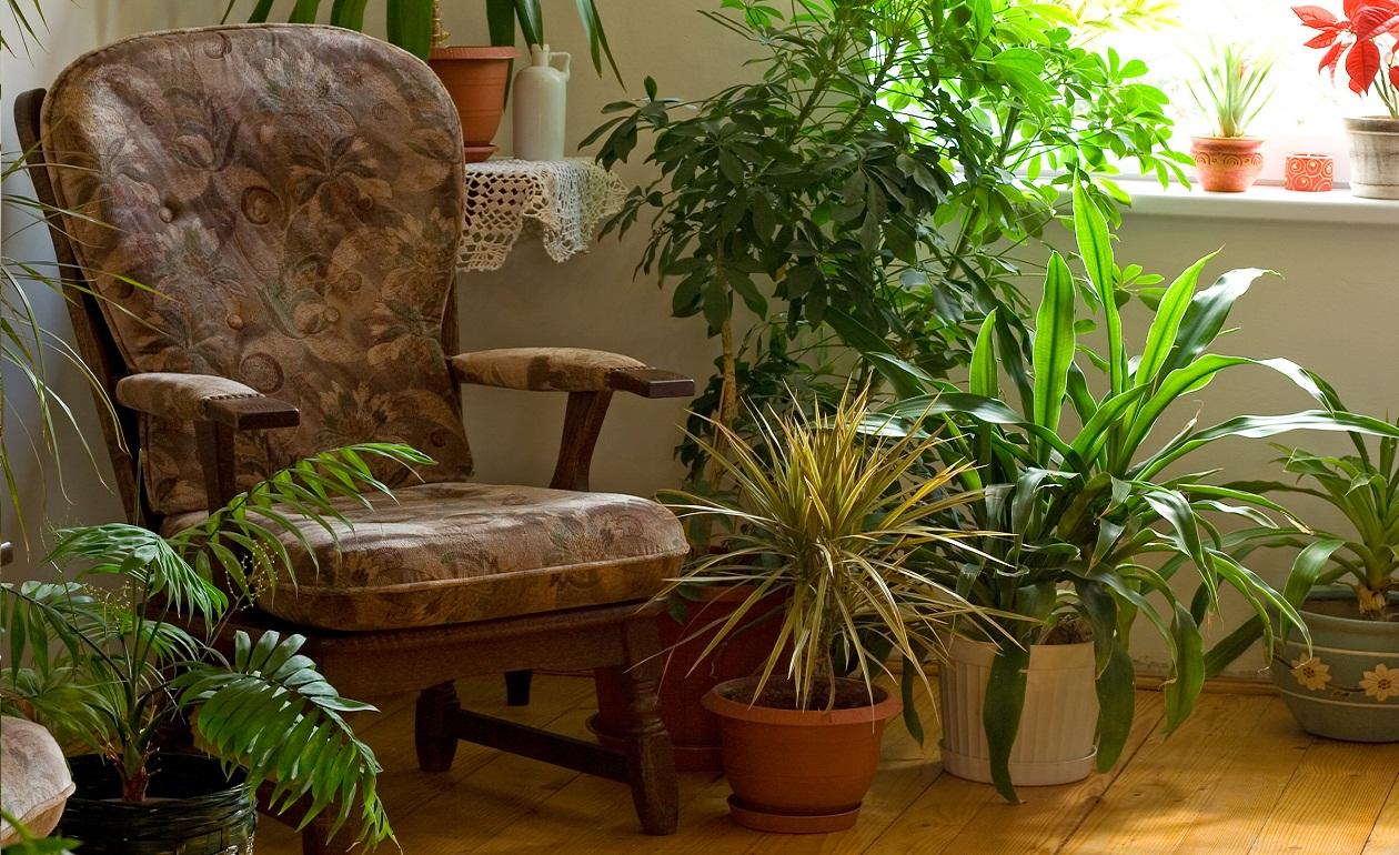 Ciudaris Inmobiliaria: Consejos para cuidar tus plantas en verano