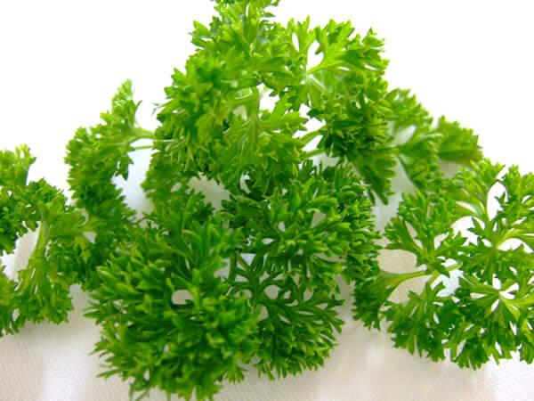 plantas curativas nuevo departamento