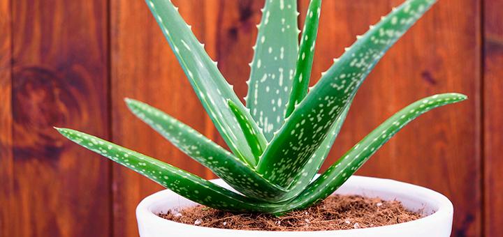 plantas faciles cuidar hogar ciudaris inmobiliaria