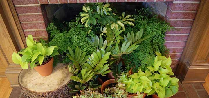 Ciudaris recomienda plantas para la decoración interior