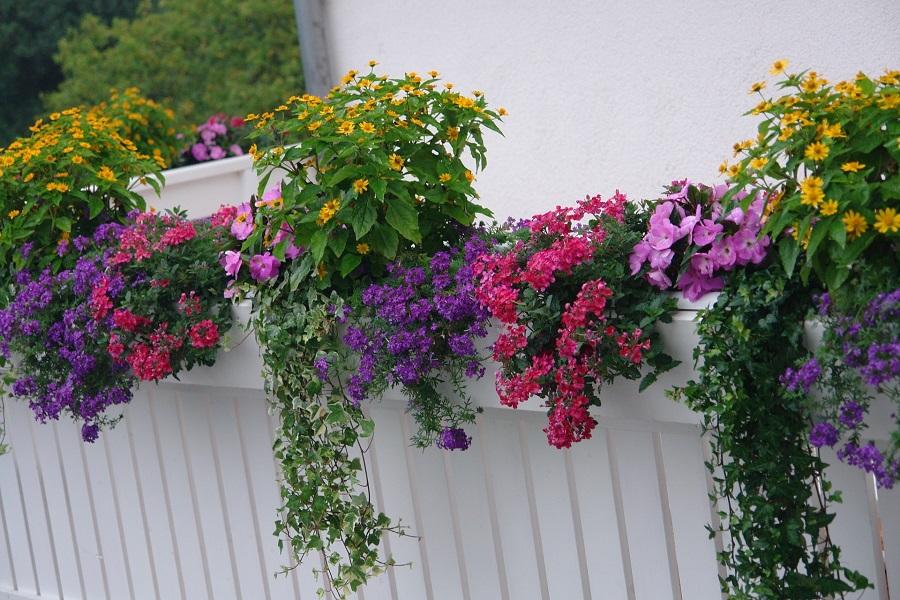 plantas primavera departamento de chiclayo