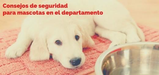 mascotas departamentos jesus maria