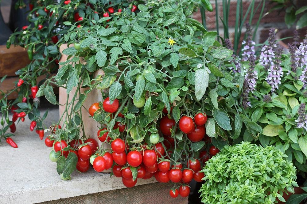 tomates-departamenos-venta-chiclayo-ciudaris